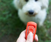 Clickertraining Hund