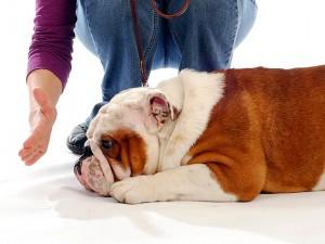 Hundeerziehung Ratgeber