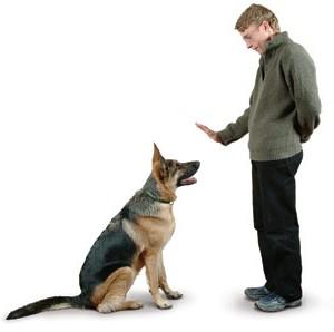 Hundetraining Kurs
